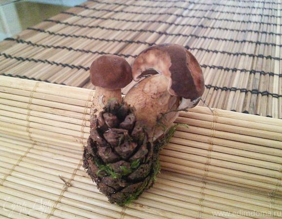 Маринованные грибы: белые, моховики