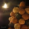 Оливки асколане «Елка»