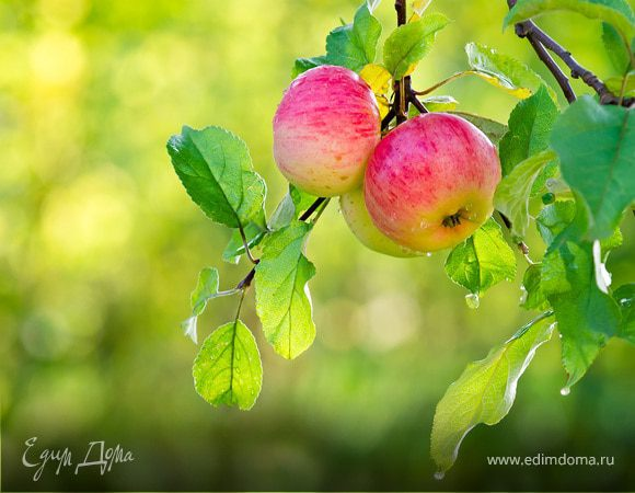 Какие растения и плодовые деревья посадить на участке