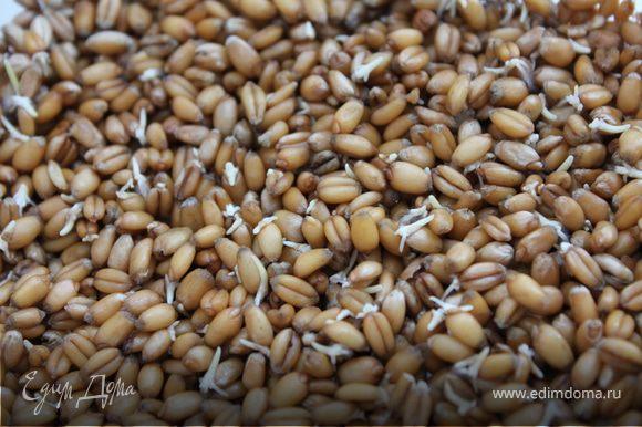 Для начала нужно конечно прорастить пшеницу!:) для этого берем пшеницу (в этом случае 150 г сухой пшеницы), перебираем ее от мусора и промываем. Заливаем чистой водой на треть объема, накрываем марлечкой и ставим проращиваться в теплое место. Следим,чтобы вода всегда присутствовала, подливаем если впитается в зерно. И где-то через 1,5 дня, примерно, она у вас даст ростки. :) Это кладезь витаминов Е и А.