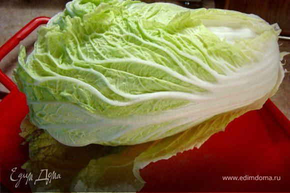 На самом деле ким-чи - это такой сорт капусты… Но растет она только на Дальнем востоке и в Корее. Пекинская капуста, по своей структуре, наиболее близка к ким-чи, поэтому будем использовать именно ее…