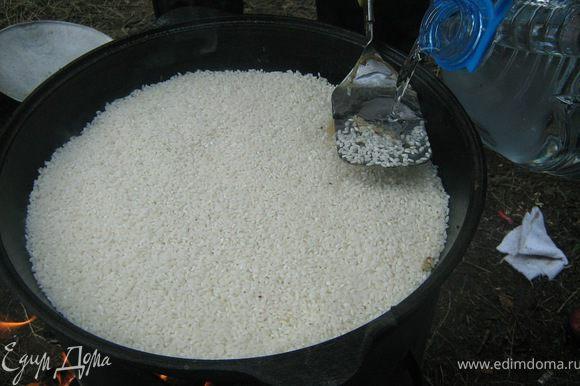Выложить ровным слоем рис