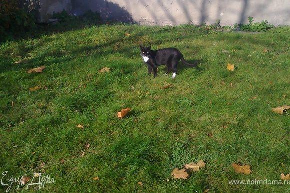 Осень в этом году замечательная!Кошки-тоже,не могу пройти мимо!