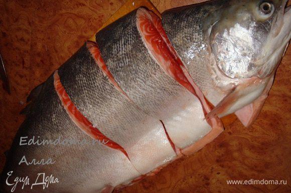 Вот такую рыбку мы поймали (почти 5 кг.)...