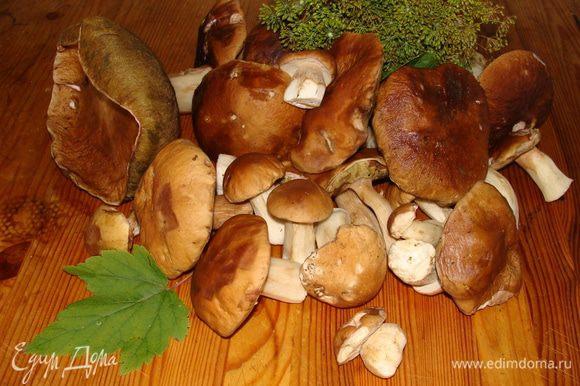 Собрать вот такие чудо-грибочки!