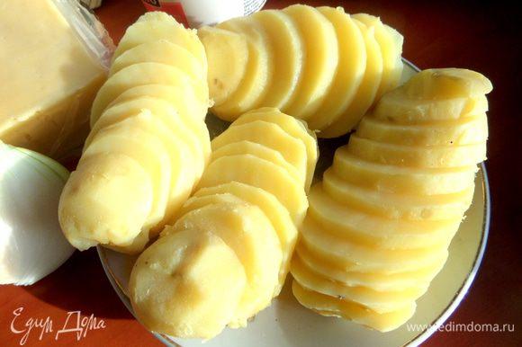 Картофель отварить, остудить и нарезать на кружочки.