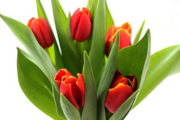 И немного цветов для хорошего настроения!!!