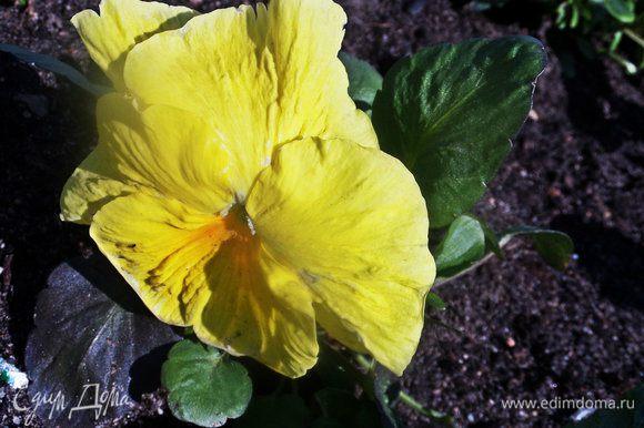Обычный цветок может радовать, если долго нет весны и тепла!