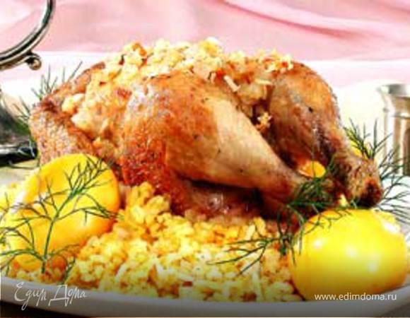 Цыплята с «золотыми» яйцами