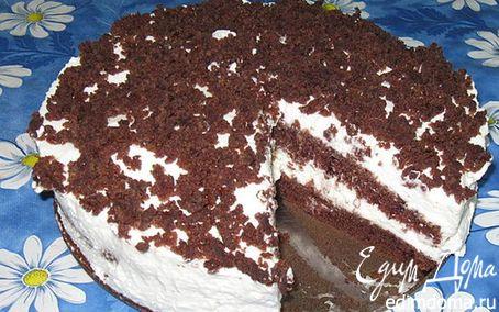 Рецепт Шоколадно-творожный торт