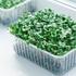 микрозелень ростков редиса