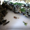 Запеканка из дикого риса