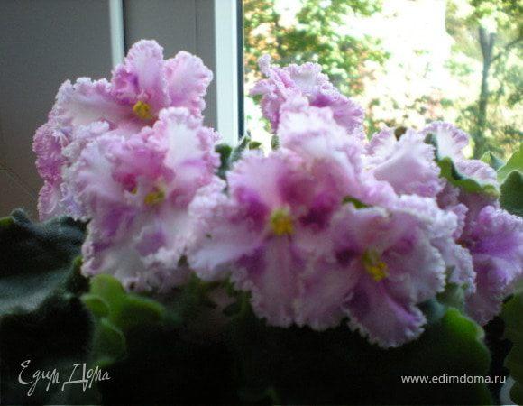 Вечная весна на подоконнике, или любителям фиалок посвящается :-)