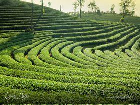 Культура чаепития