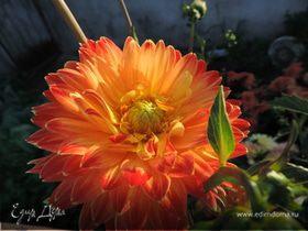 Цветочная феерия или немного лета среди зимы