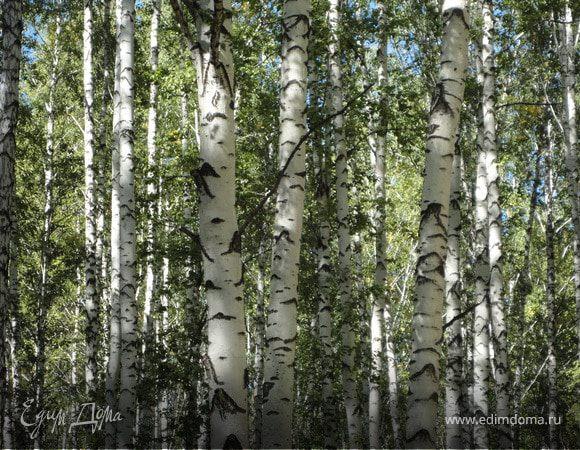 Четыре времени года леса