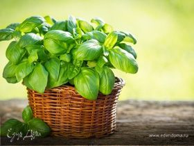 Огород круглый год: овощи и зелень на подоконнике