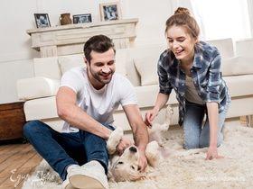 Операция «Чистые лапы»: делаем уборку в доме с домашними питомцами