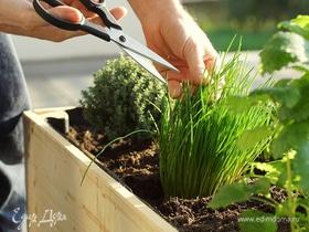 Грядка на подоконнике: как вырастить неприхотливую зелень дома
