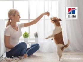 Чек-лист: как ухаживать за собакой мелкой породы