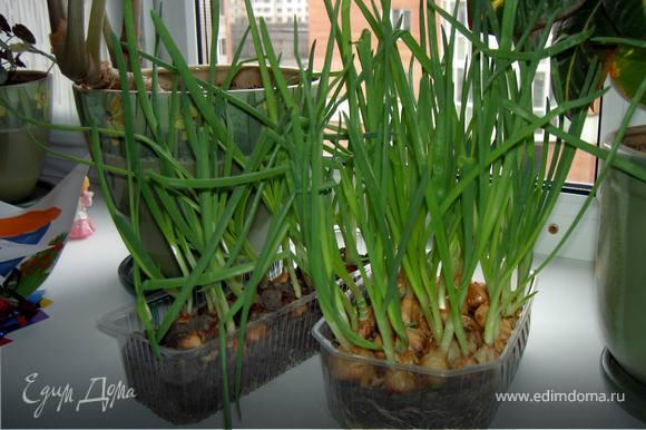 Яйца взобьем с просеянной мукой, добавим молоко, щепотку соли, мелко нарезанный зеленый лук.