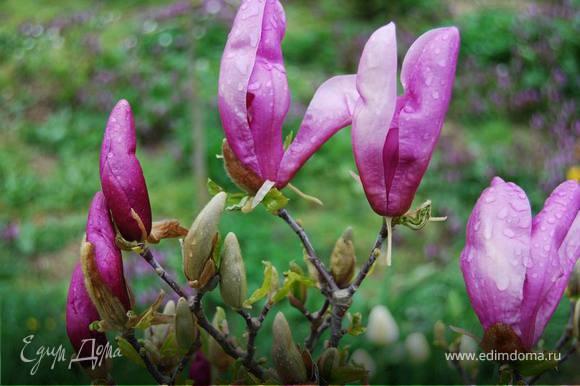 Пока овощи пекутся, взгляды так и тянутся к распускающейся весенней красоте. Сначала это были цветы магнолии...