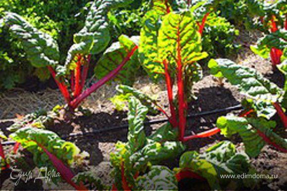 кто не любит шпинат, можно заменить листьями мангольда (листовая свекла) (1-2 минуты проварить, просушить)