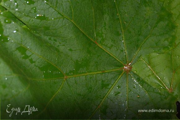 Листья вымыла в проточной воде и залила их кипятком на пару минут, чтоб стали эластичнее и начали отдавать аромат.