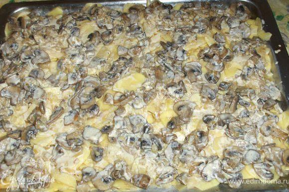 На противень выкладываем нарезанный картофель, поливаем сметанным соусом и равномерно раскладываем грибочки.