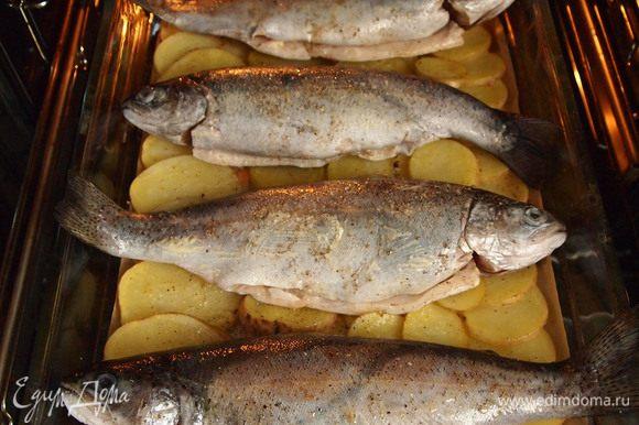 3. Подготовленную рыбу смазать оставшимся сливочным маслом внутри и снаружи, приправить солью и перцем. - Вынуть форму из духовки, уложить на картофель рыбу и продолжать запекать под пергаментом 15-20 мин.