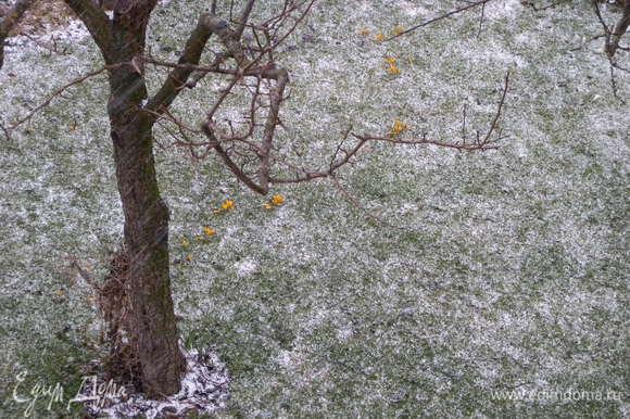Этот же газон (полянка) через пол часа. Цветочки желтенькие видно? (подробнее в посте) :-)))