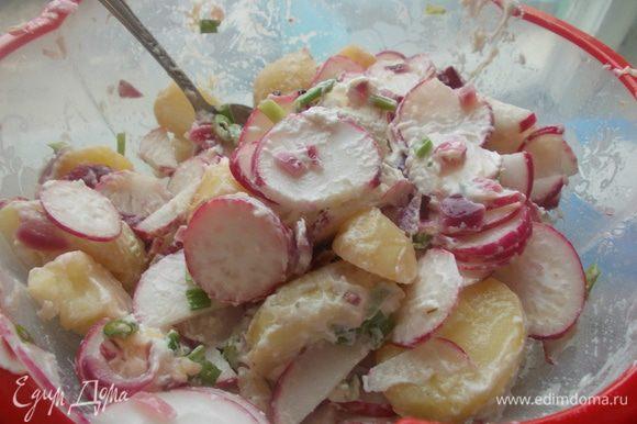 Для салата картофель отварить,остудить и нарезать.Очистить лук и нарезать кубиком,в кастрюле разогреть 1 ст.л. масла и припустить лук.Добавить уксус и 150 мл.воды,влейте бульон и варите 2 минуты,приправить солью и перцем добавить ещё 2 ст.л. масла.В горячий маринад выложить картофель и дать настояться около 2 часов.Редис нарезать кружочками,зеленый лук мелко порубить,слить картофель.Смешайте лук,редис,картофель и 100 г кремового сыра,посолить и перемешать.
