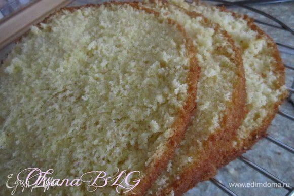 Приготовить бисквит по рецепту http://www.edimdoma.ru/retsepty/38569-biskvit-na-kipyatke-belyy в двух формах 20 см, в одну вылить 1/4-1/5 часть теста, в другую все остальное.