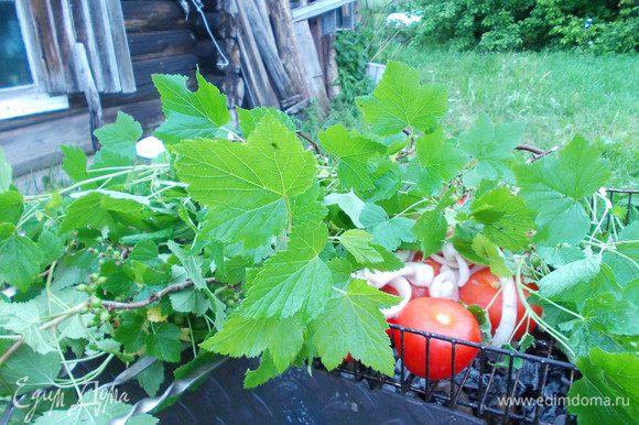 Мясо одеваем на шампуры,помидорчики на решётку,накрываем листвой смородины,