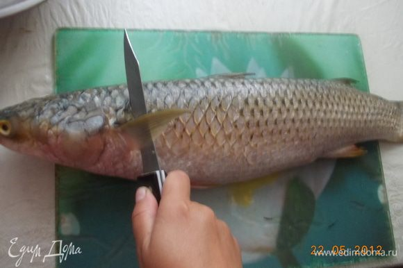 У рыбы отрезать голову и хвост. Аккуратно вынуть внутренности и вымыть.