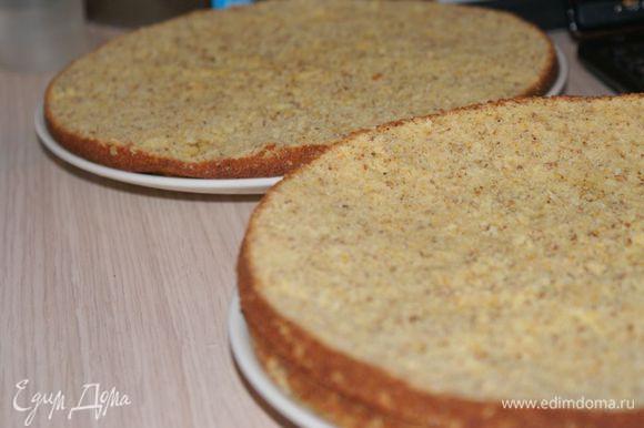 Полностью остывший бисквит разрезать на 3 коржа. Коржи пропитать оставшимся сиропом от апельсинов.