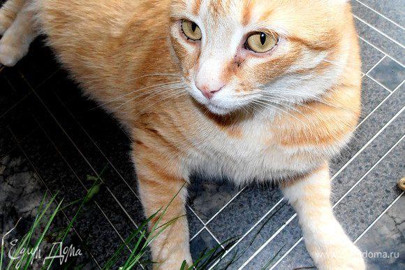 Ну, и по традиции Тофик,возлежащий около свежей травки на кухне (которую они с кошкой напару с удовольствием жуют летом!).