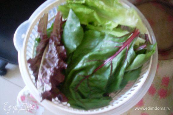 Помыть и обсушить листья салата и свеклы.