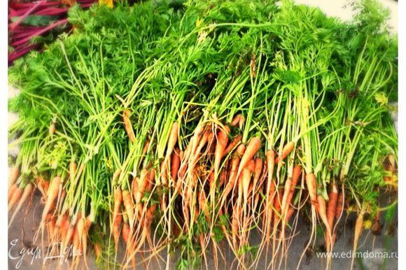 Сначала нужно нарвать свежей морковки на огороде!!