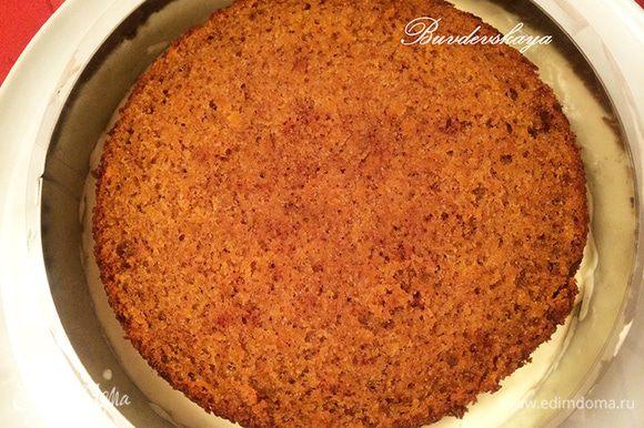 Сверху на сырный мусс выложить первый морковный корж и немного «утопить» его, покрыть сверху медовым муссом.