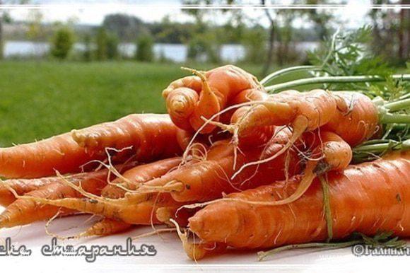 Аез - морковь Какую морковку использовать? Есть мнение, что надо использовать только желтую морковь. Я спрашивал, т.е. специально выяснял этот вопрос у Мастера. Ответ получил неожиданный. Красная морковь, было сказано мне, в Узбекистане нечасто встречается. Свойства почв и вода, которой там недостаток. Поэтому морковь повсеместно желтая. Красная дороже. Отсюда и…. Не берусь утверждать, что это АБСОЛЮТНО верно. Но вполне логично. Так что красная, сочная и сладкая морковь, к которой мы привыкли, имеет полное право быть в плове.