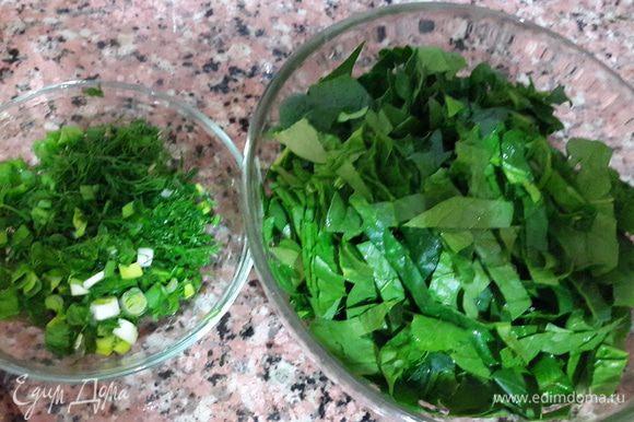 Шпинат и зелень помыть и нарезать.