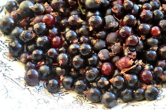 Перебираем черную смородину, освобождая ягоды от веточек и листочков.
