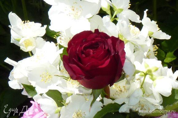 Собрать цветы и бутоны жасмина с ветки.