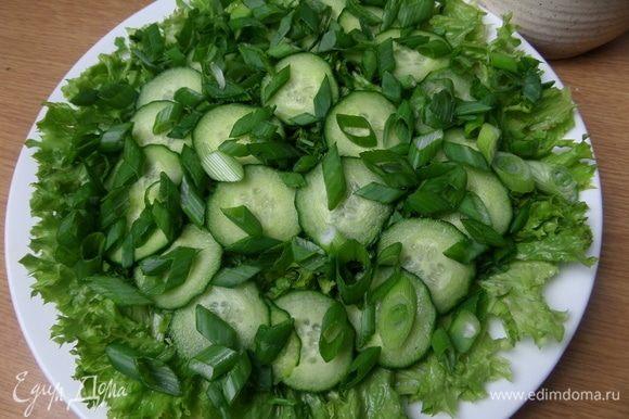 Зеленый лук.