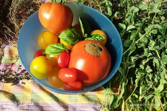 В идеале для салата понадобятся помидоры разных сортов и цветов. Рекомендую использовать также зеленоватые, полуспелые помидоры.