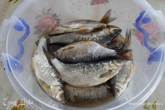 Рыба через 3 суток.