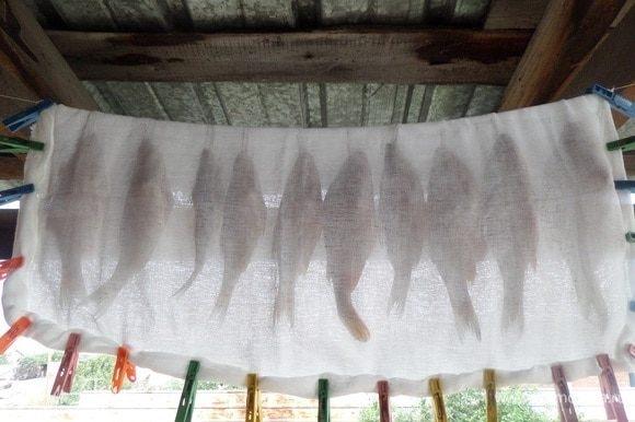 Развешиваем рыбу на прочную нить в хорошо проветриваемом месте. Накрываем марлей, закрепив края прищепками.Оставляем на 7 суток.