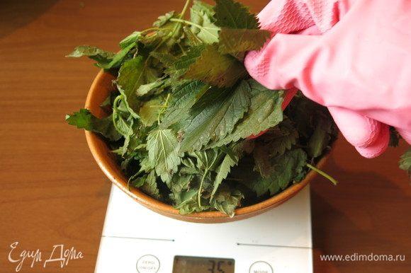 Обрываем листья крапивы. Рекомендую взять перчатки. Два больших пучка — 120 г листьев, у меня был только один пучок.