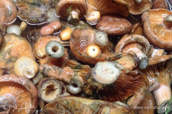 Сложили рыжики в кастрюлю, соли добавили на 1 кг грибов ложку столовую, залили холодной водой, сверху положили тарелку, так чтобы все грибочки были под водой. Пусть часа два-три стоит, отмокает от лесного налета.